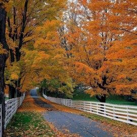 Höstfärger från New England